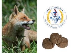 Alte 20 de milioane de lei pentru vaccinarea vulpilor din avion, cheltuite prin achiziții dubioase?