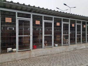 """Construcția adăpostului pentru animale la Bălți, un """"sanatoriu"""" pentru câinii vagabonzi ridicat din banii contribuabililor bălțeni"""