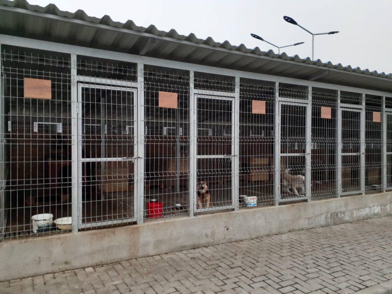 Строительство бельцкого приюта для животных – организация «санатория» для бродячих собак за деньги бельцких налогоплательщиков